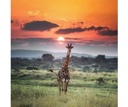 South Africa Adventure ~ MAY 19-28, 2019