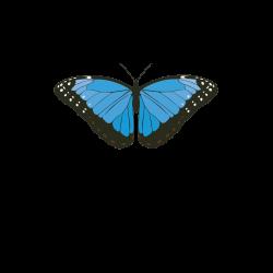 Evolve Botanica
